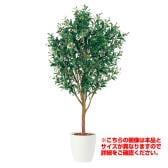 観葉植物 人工 樹木 ライプオリーブ 高さ1500mm Mサイズ 鉢:RP-300