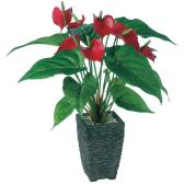 観葉植物 人工 樹木 アンスリュウム 高さ400mm Pサイズ 鉢:Pスクエア(BK)