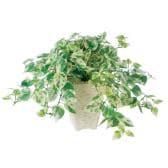 観葉植物 人工 樹木 シサス R 高さ350mm Pサイズ 鉢:Pスクエア(WH)