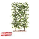 観葉植物 人工 樹木 ベンジャミナスプラッシュパーテーション 高さ2000mm Lサイズ 鉢:ガーデンペット
