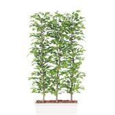 観葉植物 人工 樹木 ベンジャミナスプラッシュパーテーション 高さ1800mm Lサイズ 鉢:ガーデンペット