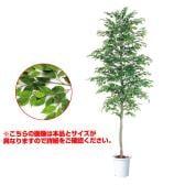 観葉植物 人工 樹木 ベンジャミナスプラッシュセパレート 高さ3500mm LLサイズ 鉢:懸崖15号