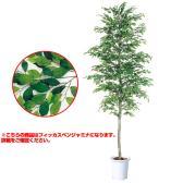 観葉植物 人工 樹木 フィッカスベンジャミナセパレート 高さ3500mm LLサイズ 鉢:懸崖15号