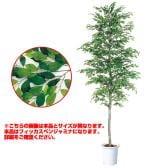観葉植物 人工 樹木 フィッカスベンジャミナセパレート 高さ3000mm LLサイズ 鉢:懸崖13号