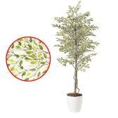観葉植物 人工 樹木 ベンジャミナスターライト 高さ1800mm Lサイズ 鉢:RP-300