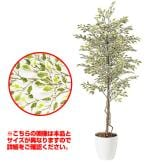 観葉植物 人工 樹木 ベンジャミナスターライト 高さ1500mm Mサイズ 鉢:RP-265
