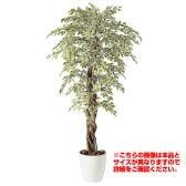 観葉植物 人工 樹木 ベンジャミナスターライトリアナ 高さ1500mm Mサイズ 鉢:RP-300