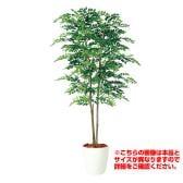 観葉植物 人工 樹木 アカシアデュアル 高さ2000mm Lサイズ 鉢:RP-300