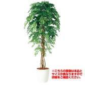 観葉植物 人工 樹木 アカシアリアナ 高さ2000mm Lサイズ 鉢:RP-370