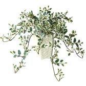 観葉植物 人工 樹木 プミラ 高さ400mm Pサイズ 鉢:Pスクエア(WH)