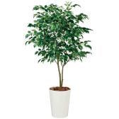 観葉植物 人工 樹木 ベンジャミン ワイド FST 高さ1500mm Mサイズ 鉢:クォーツ300