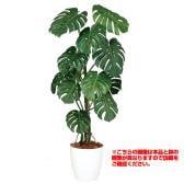 観葉植物 人工 樹木 モンステラバイン 高さ1500mm Mサイズ 鉢:簡易ポット