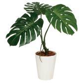 観葉植物 人工 樹木 モンステラバイン 高さ700mm SSサイズ 鉢:クォーツ180