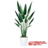観葉植物 人工 樹木 ストレリチア・レギネ 高さ1300mm Sサイズ 鉢:簡易ポット
