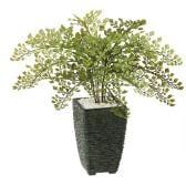 観葉植物 人工 樹木 アジアンタム 高さ300mm Pサイズ 鉢:Pスクエア(BK)