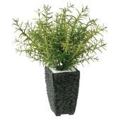 【次回入荷未定】観葉植物 人工 樹木 ローズマリー 高さ350mm Pサイズ 鉢:Pスクエア(BK)
