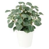 観葉植物 人工 樹木 フィットニア 高さ400mm Pサイズ 鉢:CV-06
