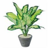 観葉植物 人工 樹木 ディフェンバギアカミーラ 高さ500mm Pサイズ 鉢:PラウンドS(BK)