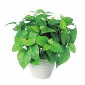 観葉植物 人工 樹木 ライムポトス 高さ350mm Pサイズ 鉢:PラウンドL(WH)