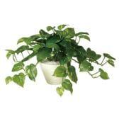 観葉植物 人工 樹木 ポトスブッシュ 高さ300mm Pサイズ 鉢:PラウンドL(WH)