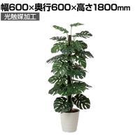 SOCIA モンステラ1.8 フェイクグリーン 観葉植物 日本製 光触媒加工 V-CAT採用 抗菌 消臭 防汚 ホ...