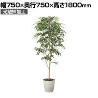 SOCIA トリネコ1.8 フェイクグリーン 観葉植物 日本製 光触媒加工 V-CAT採用 抗菌 消臭 防汚 ホル...