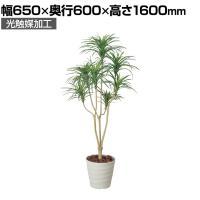 SOCIA ユッカ1.6 フェイクグリーン 観葉植物 日本製 光触媒加工 V-CAT採用 抗菌 消臭 防汚 ホルム...