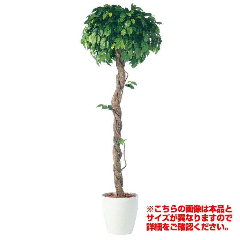 観葉植物 人工 樹木 フィッカスベンジャミナシングル 高さ2000mm Lサイズ 鉢:RP-370
