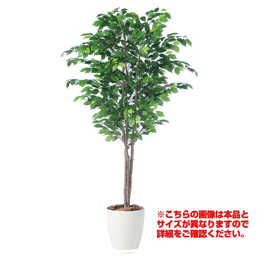 観葉植物 人工 樹木 フィッカスベンジャミナトリプル 高さ2000mm Lサイズ 鉢:RP-300