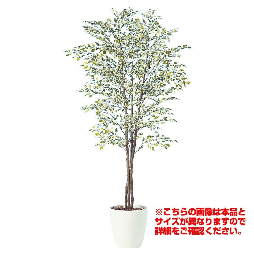 観葉植物 人工 樹木 ベンジャミナスターライトトリプル 高さ2000mm Lサイズ 鉢:RP-300