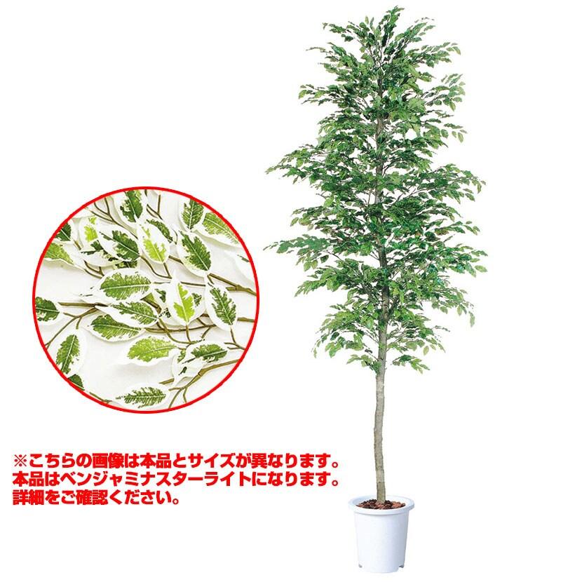 観葉植物 人工 樹木 ベンジャミナスターライトセパレート 高さ4000mm LLサイズ 鉢:懸崖15号