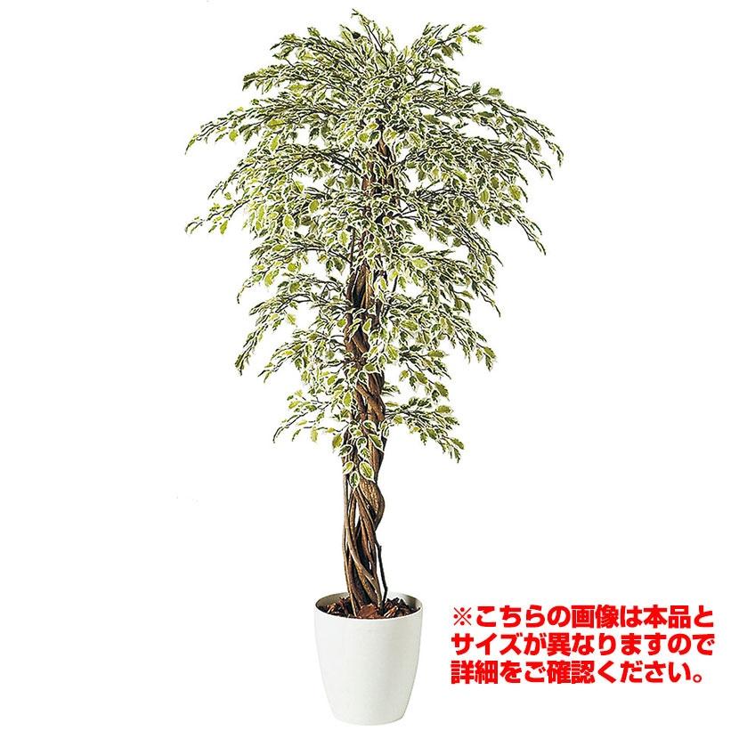 観葉植物 人工 樹木 ベンジャミナスターライトリアナ 高さ2000mm Lサイズ 鉢:RP-370