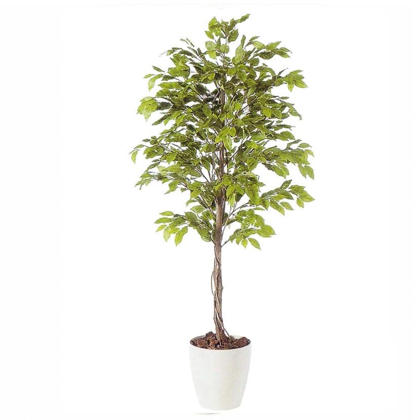 観葉植物 人工 樹木 ベンジャミナスプラッシュ 高さ1800mm Lサイズ 鉢:RP-300