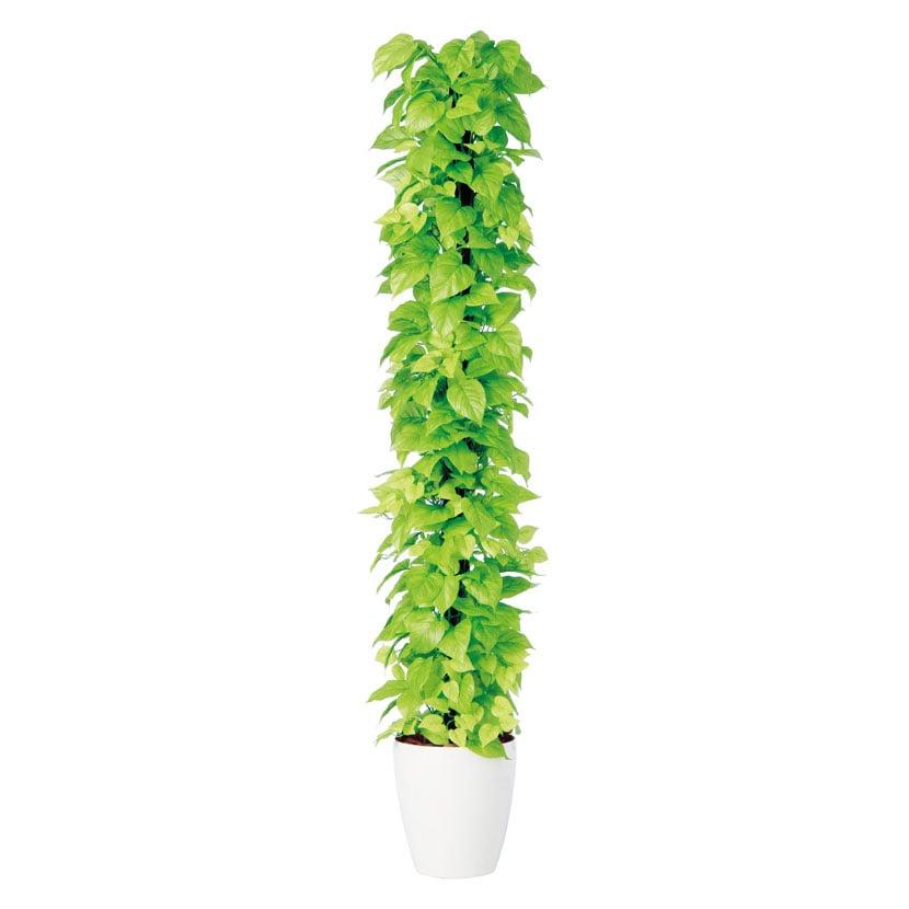 観葉植物 人工 樹木 ライムポトスヘゴ 高さ1800mm Lサイズ 鉢:RP-265