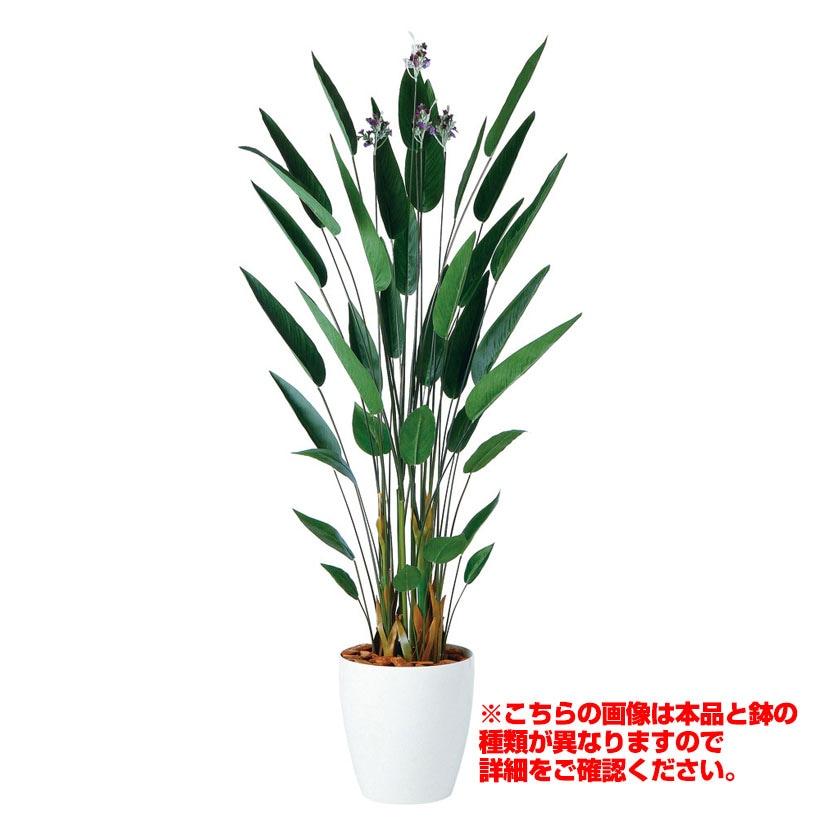 観葉植物 人工 樹木 カンナ 高さ1800mm Lサイズ 鉢:簡易ポット