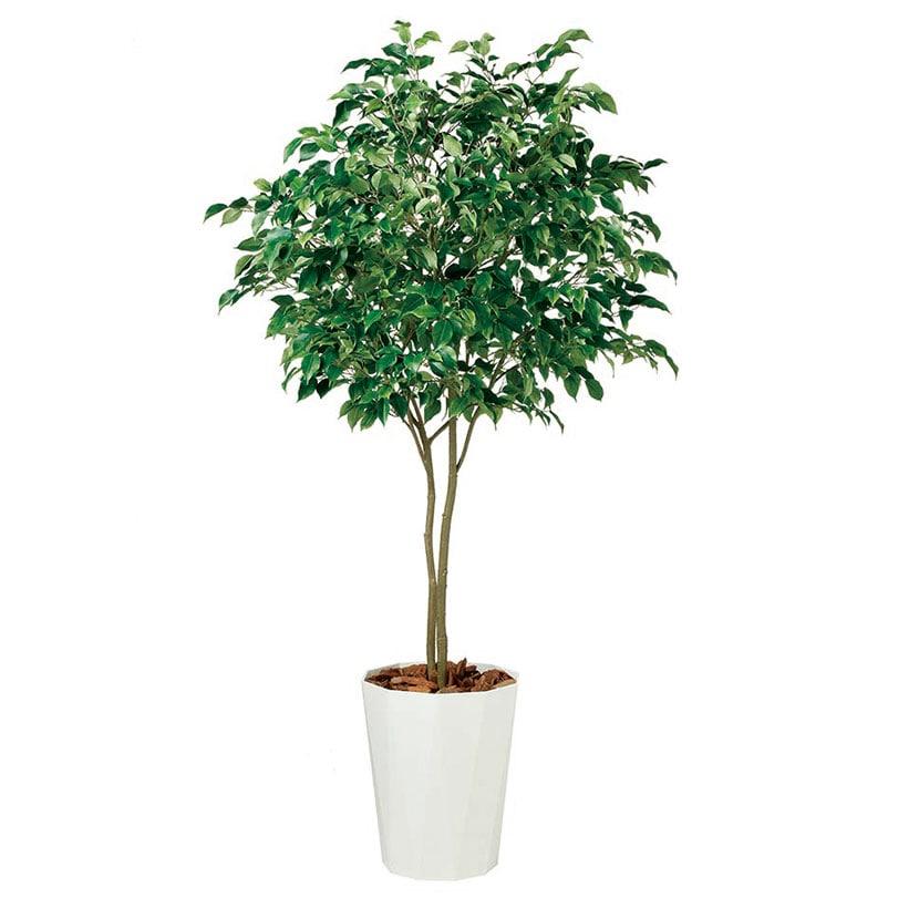 観葉植物 人工 樹木 ベンジャミン ワイド FST 高さ2000mm Lサイズ 鉢:クォーツ360