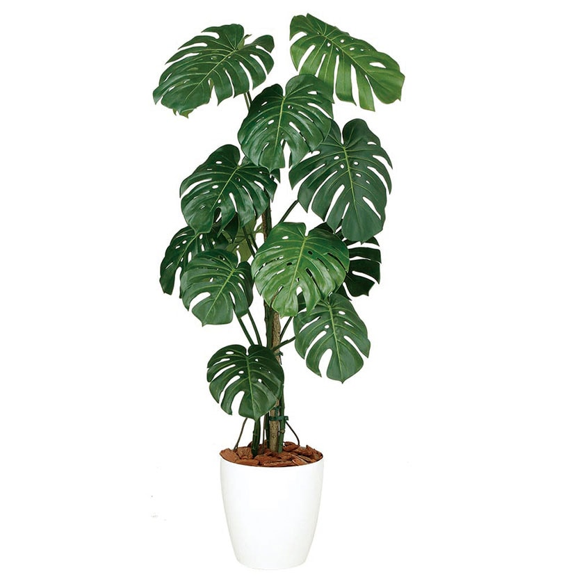 観葉植物 人工 樹木 モンステラバイン 高さ1500mm Mサイズ 鉢:RP-300