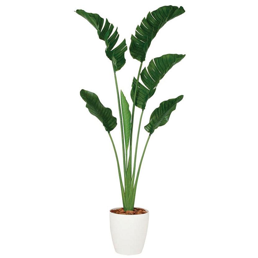 観葉植物 人工 樹木 ストレリチア・オーガスタ 高さ2000mm Lサイズ 鉢:RP-300