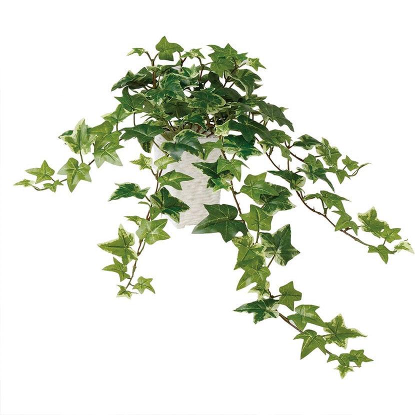 観葉植物 人工 樹木 セージアイビー 高さ600mm SSサイズ 鉢:Pスクエア(WH)
