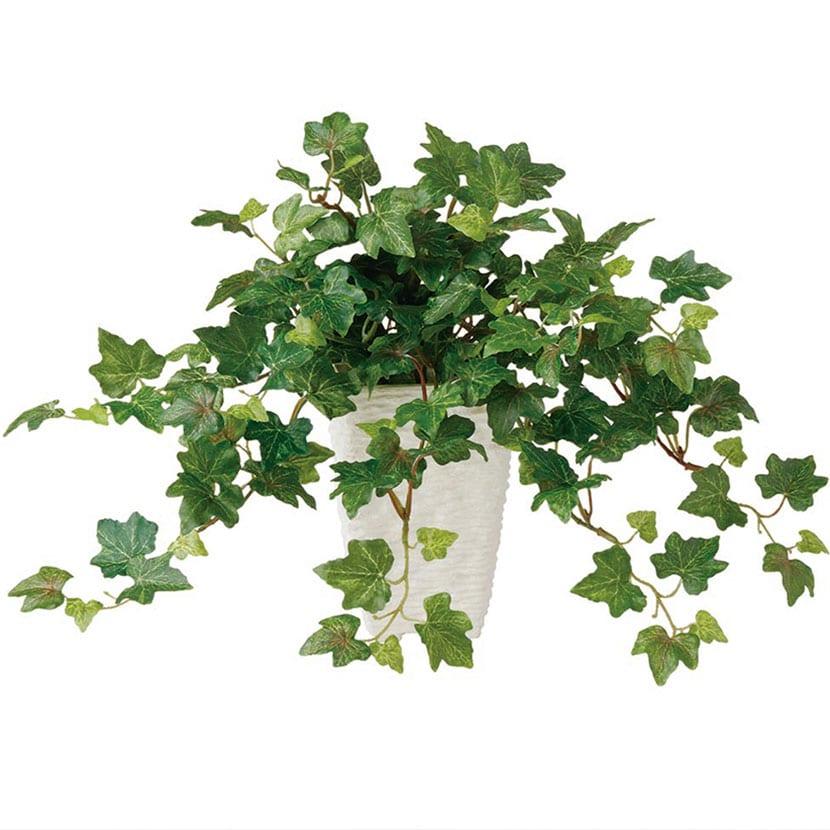 観葉植物 人工 樹木 ジャーマンアイビー 高さ300mm Pサイズ 鉢:Pスクエア(WH)